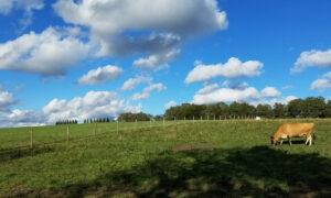 Pasture design and nutrient management planning
