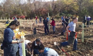 In partnership with the Chesapeake Bay Foundation, volunteers plant native saplings