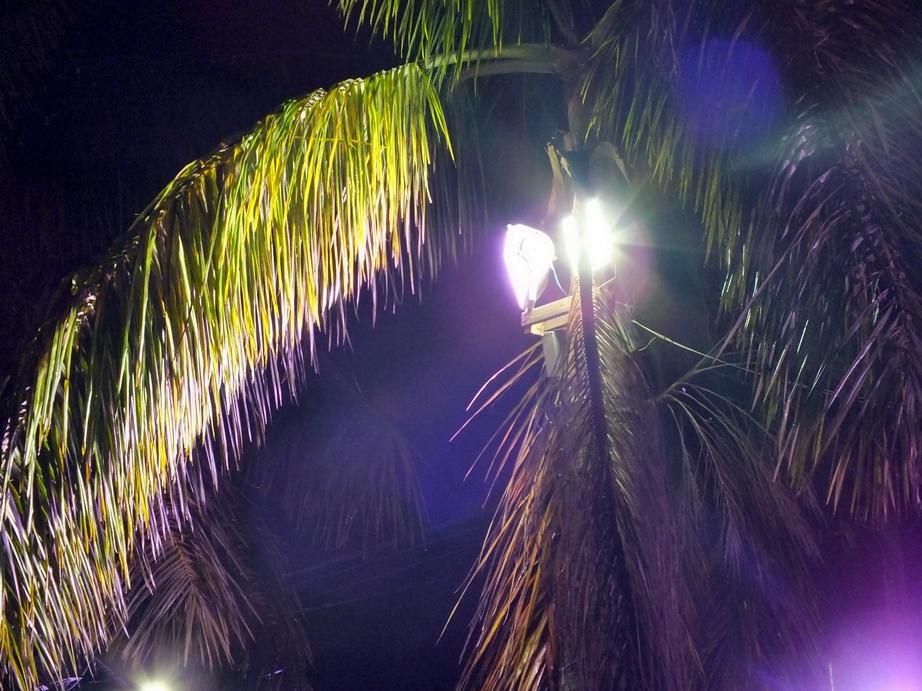 Refletores presos podem causar danos às árvores. (Foto: João Henrique | Maricá Info)