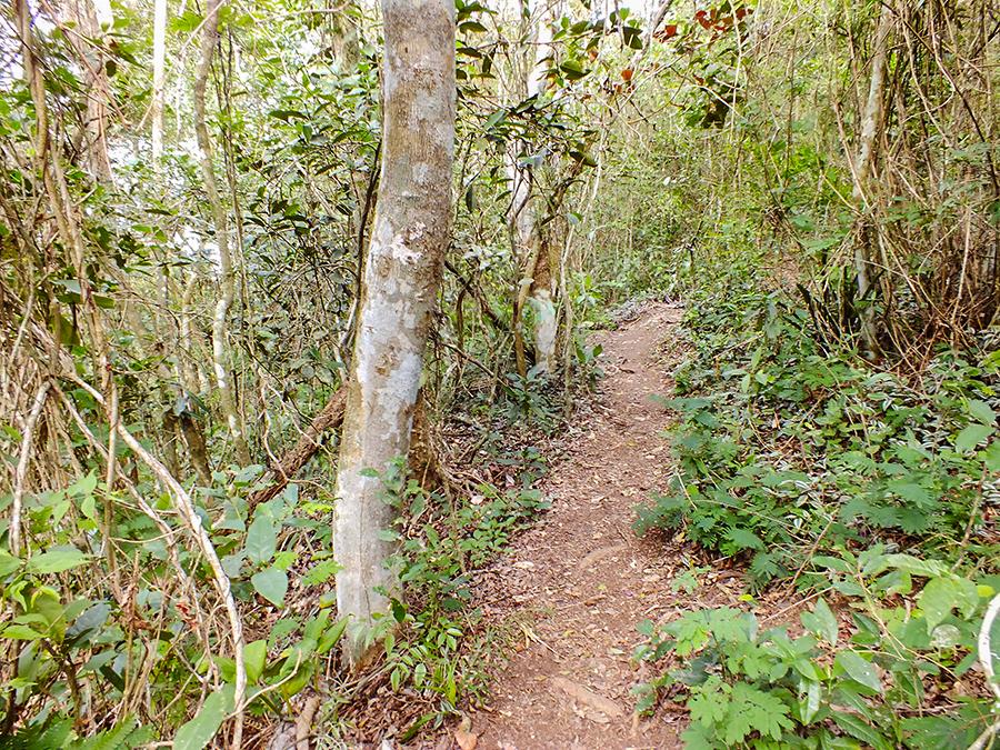 Trilha tem duração de aproximadamente 1h30 dependendo do ritmo da caminhada. (foto: João Henrique / Maricá Info)