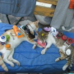 stuff on cats