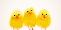 Easter_Chick_12BR