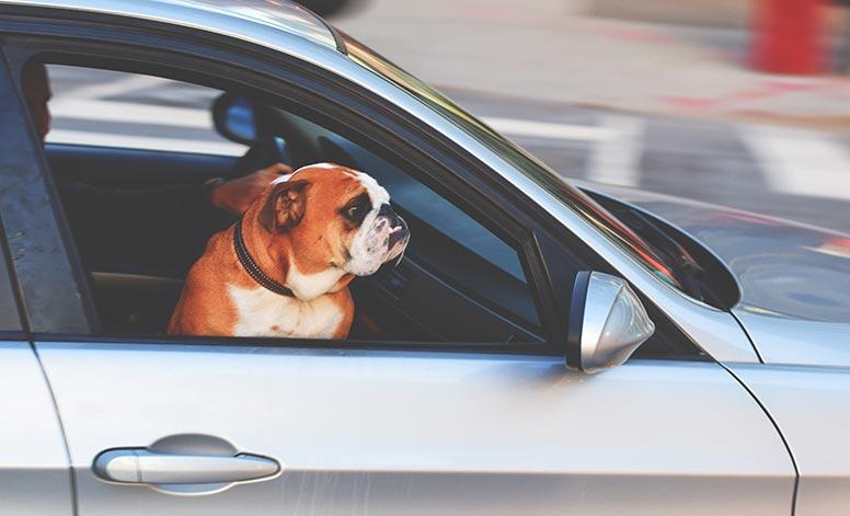 Auto Insurance Agents Near Me