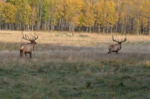 18 Saskatchewan Elk Hunting Reserve for sale 1