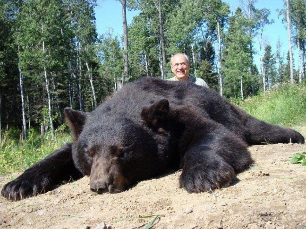 black bear hunts