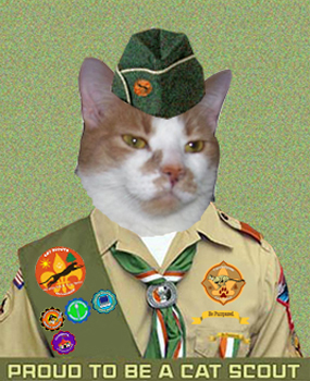 Cat Scout Sammy