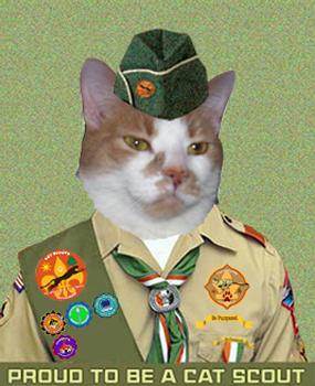 Cat Scout Sammy