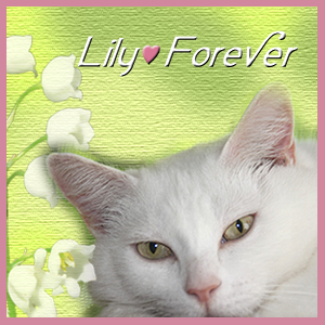 Lily,+Over+The+Rainbow