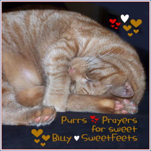 Purrs and Prayers for Billy SweetFeets