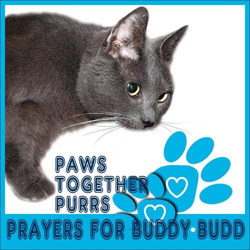 PurrsPrayers for BuddyBudd