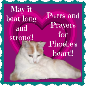 phoebesheart