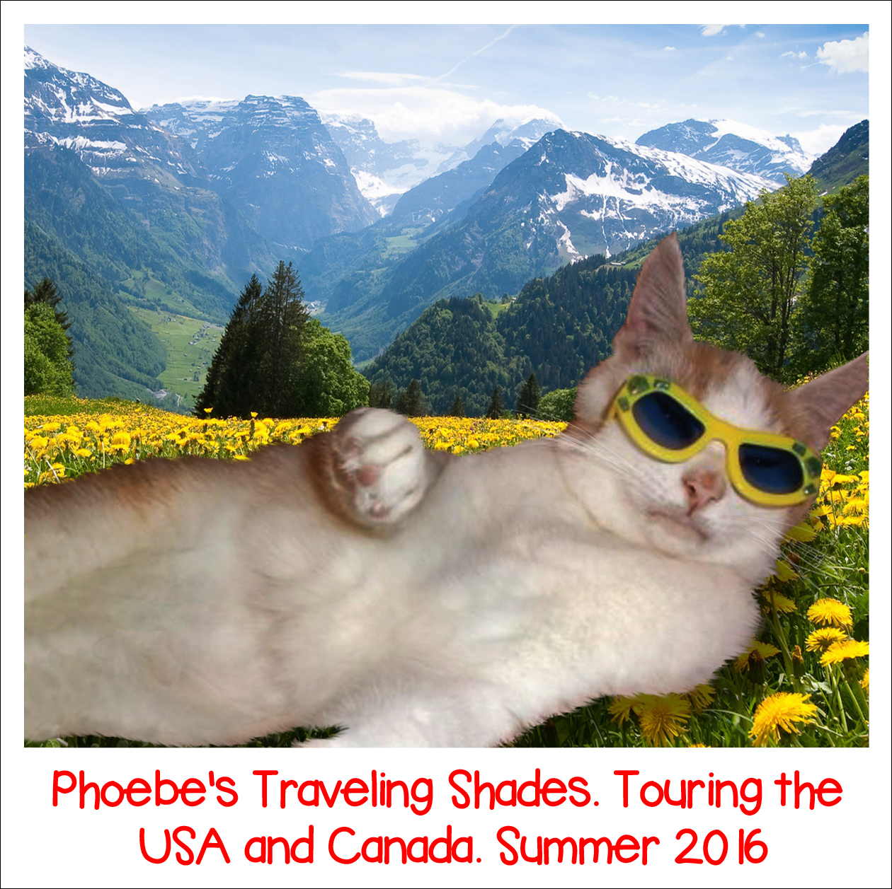 Phoebe's Traveling Shades