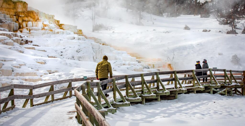 mammoth hot springs in yellowstone in the winter