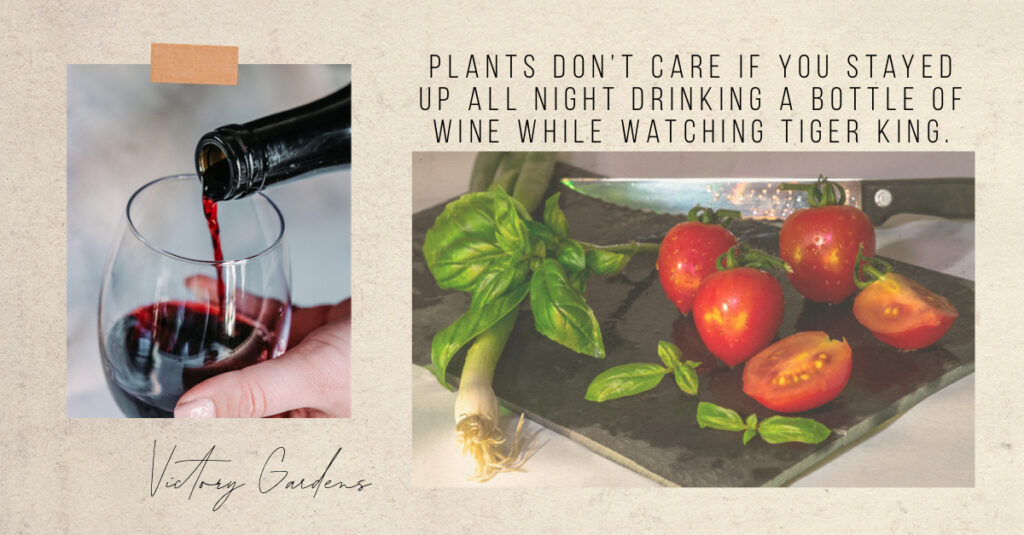plants don't care if you drank wine and watched tiger king all night