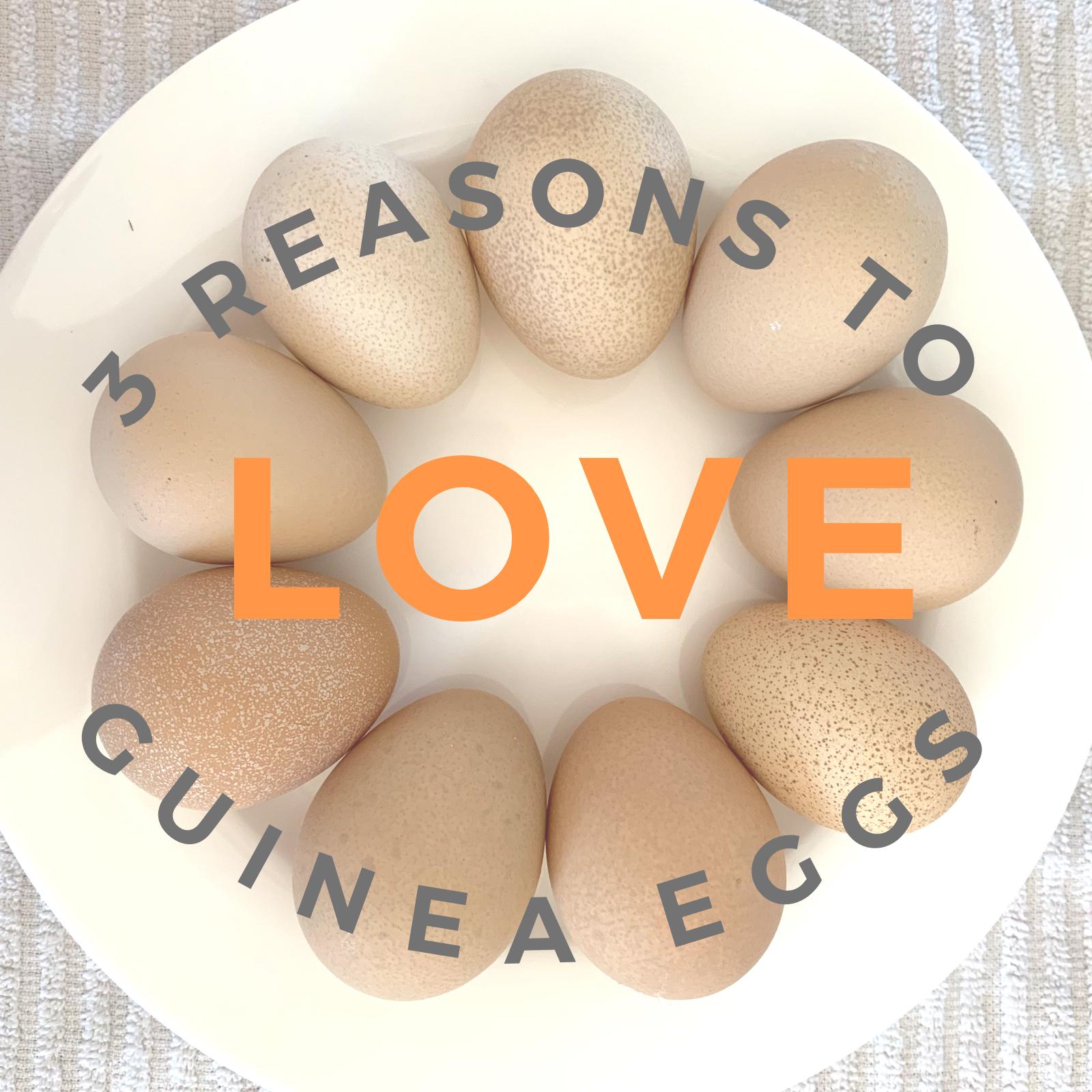 Guinea eggs