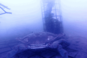 Crabbing With A GoPro