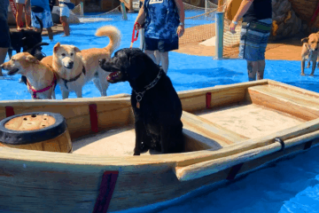 Dogs Take Over The Water Park!