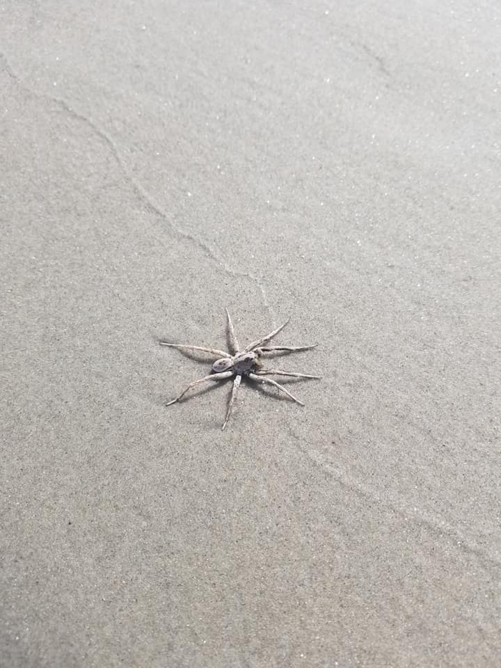 What Is The Giant Spider On The Wildwood Crest Beach