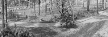 Camellia Arboretum Opens