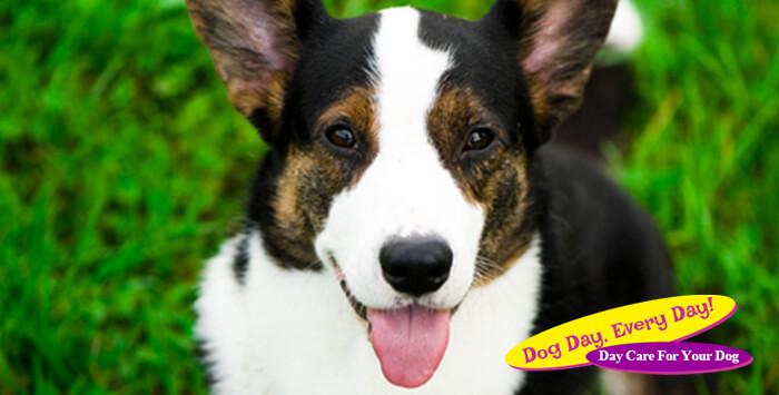 5 Reasons to Consider Adopting An Older Dog