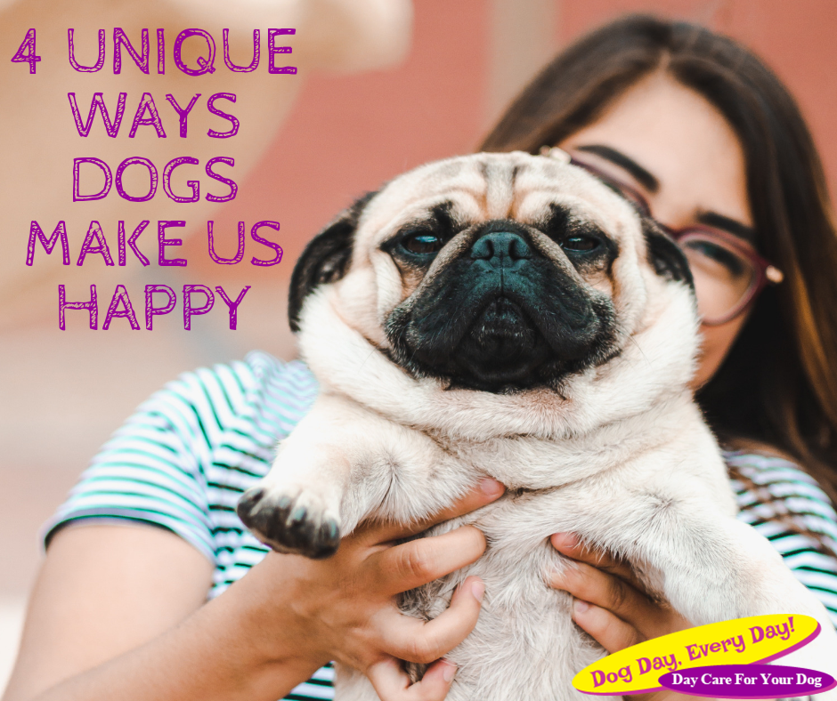 4 Unique Ways Dogs Make Us Happy