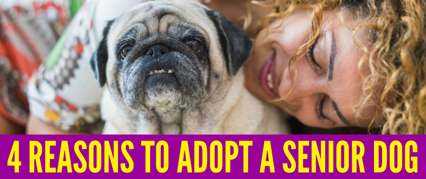 4 Reasons To Adopt A Senior Dog