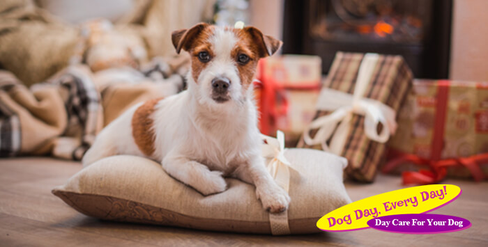 Learn Why Dogs Don't Make Good Christmas Gifts