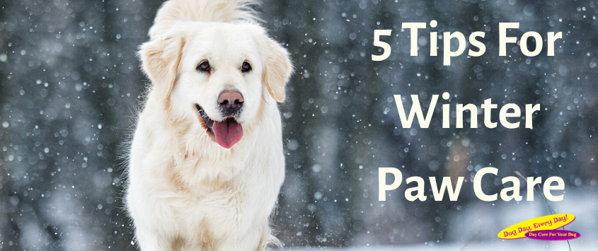 5 Tips for Winter Paw Care