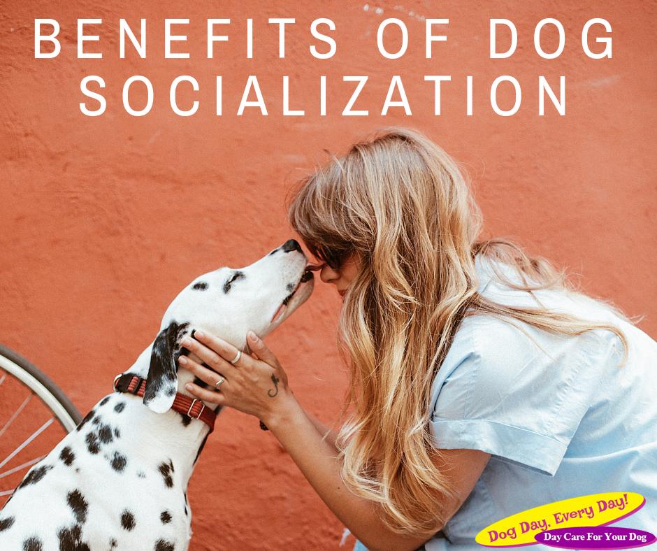 Benefits of Dog Socialization