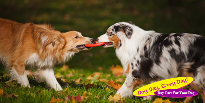 Tips on Helping Your Dogs Get Along With Each Other