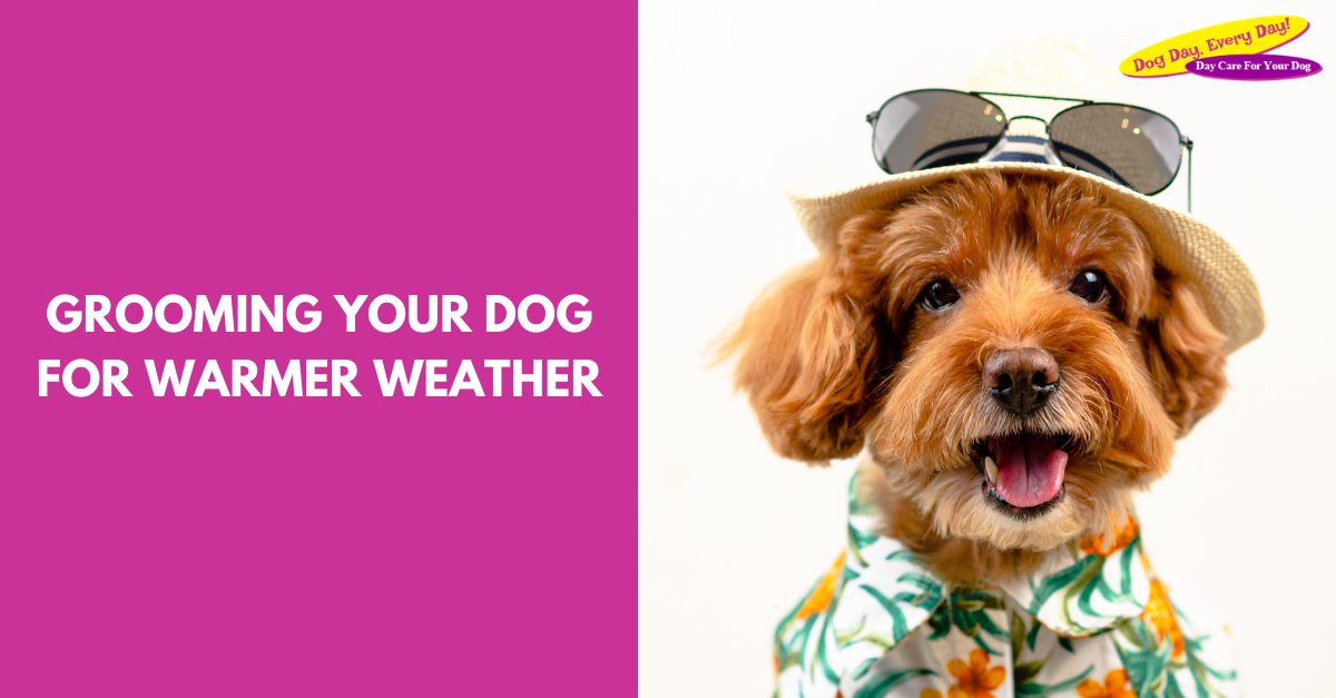 Grooming Your Dog For Warmer Weather