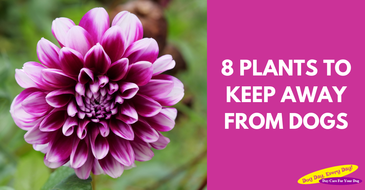 8 Plants To Keep Away From Your Dogs