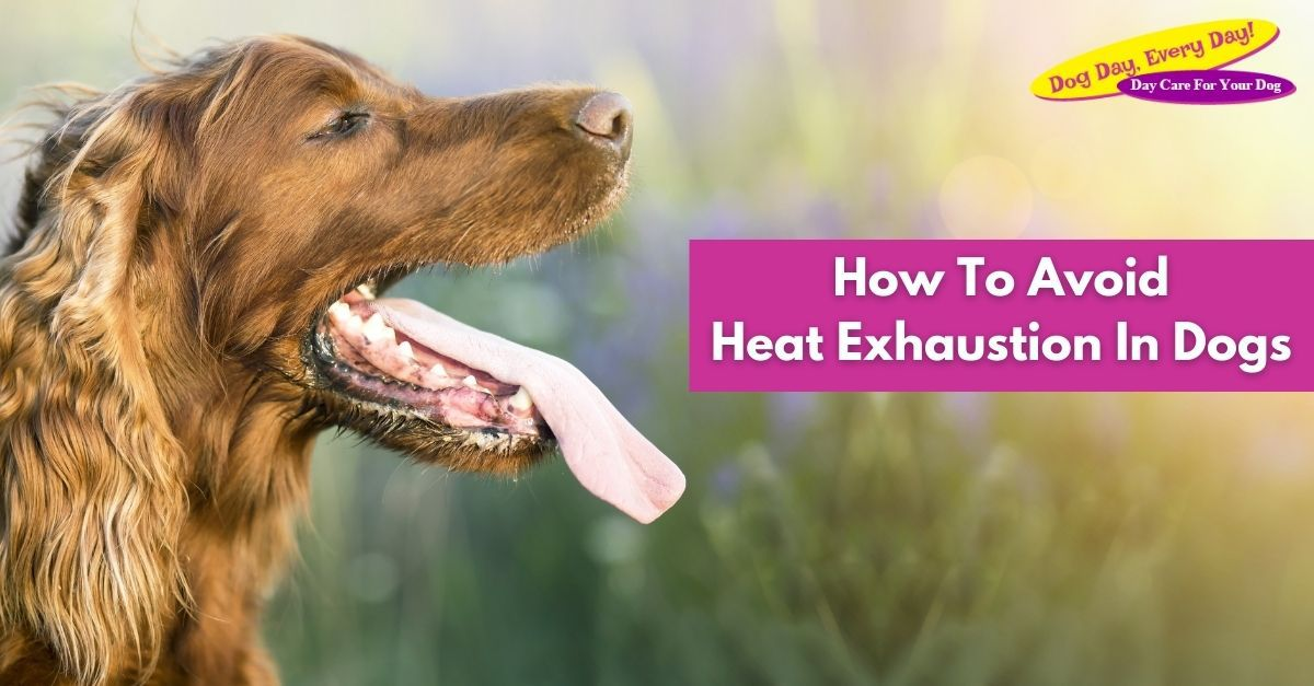 How To Avoid Heat Exhaustion In Dogs