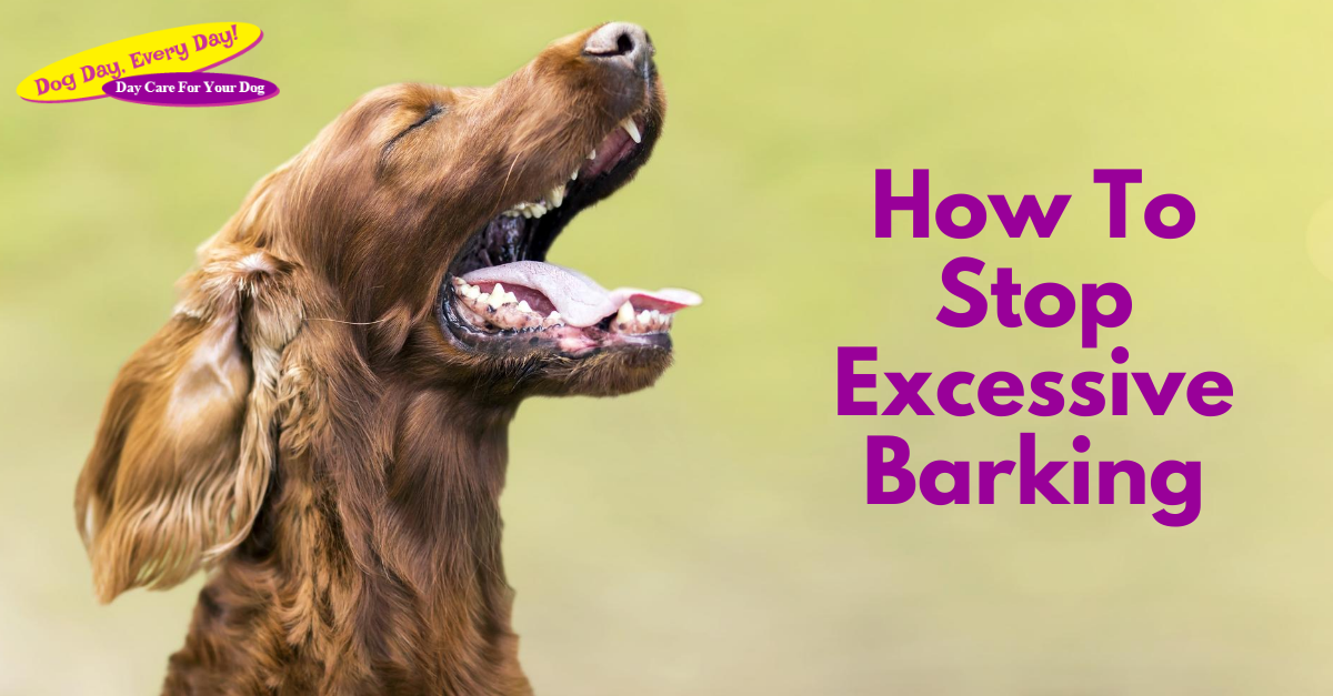 How To Stop Excessive Barking