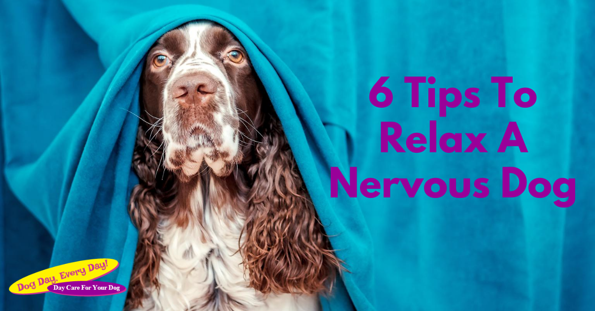6 Tips To Relax A Nervous Dog