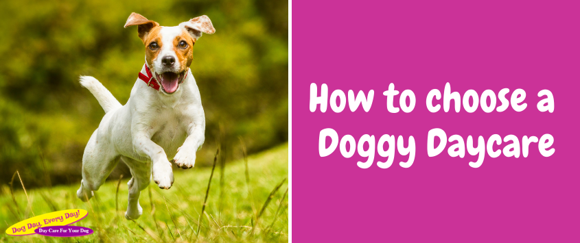 How To Choose A Doggy Daycare