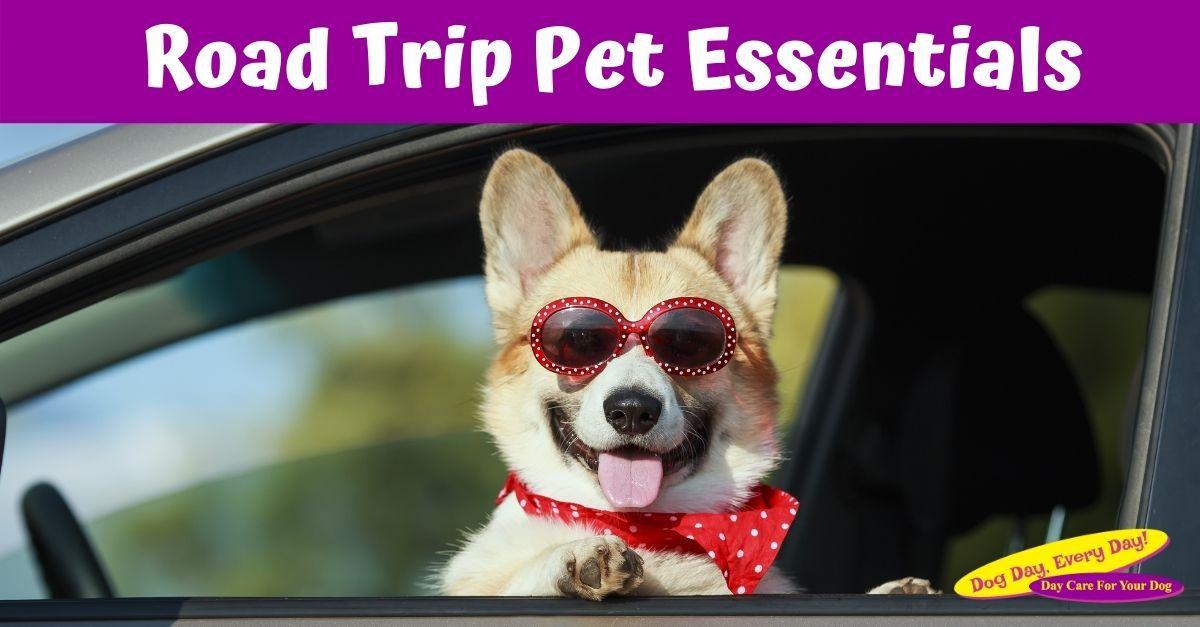 Road Trip Pet Essentials