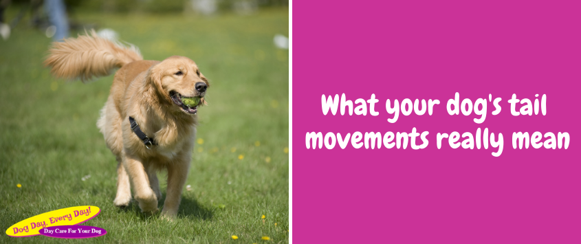 What Your Dog's Tail Movements Really Mean