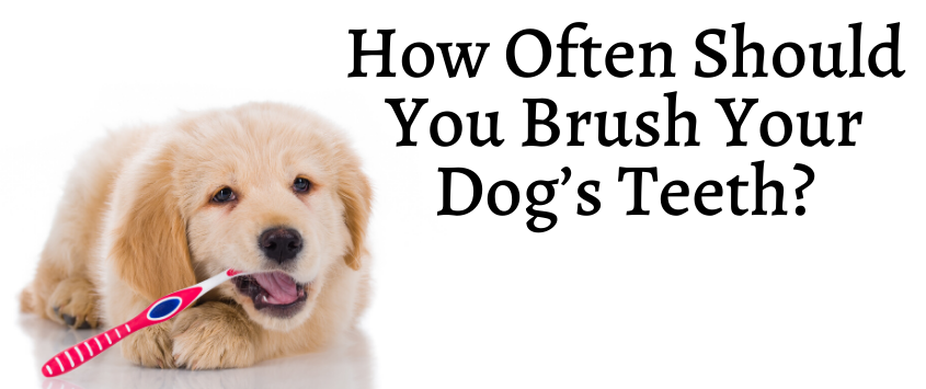 How Often Should You Brush Your Dog's Teeth