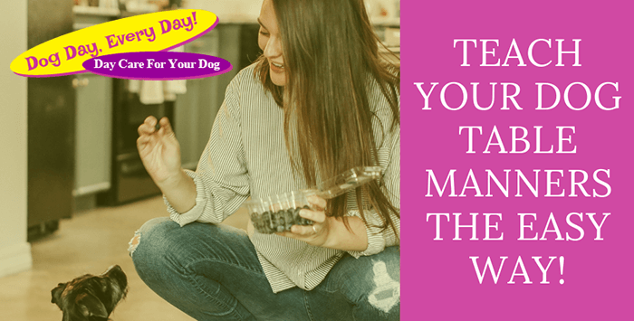 Teach Your Dog Table Manners The Easy Way!