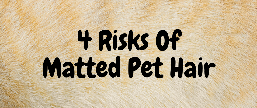 4 Risks Of Matted Pet Hair