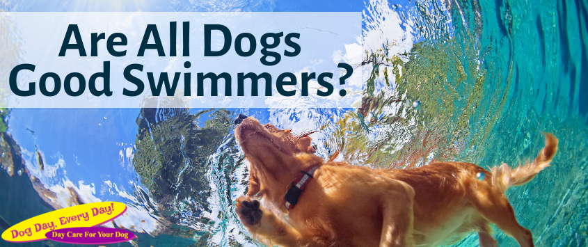 Are All Dogs Good Swimmers?