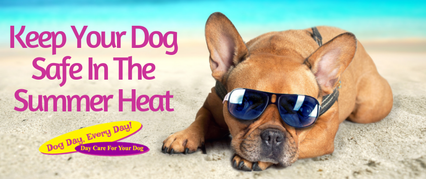 Keep Your Dog Safe in the Summer Heat