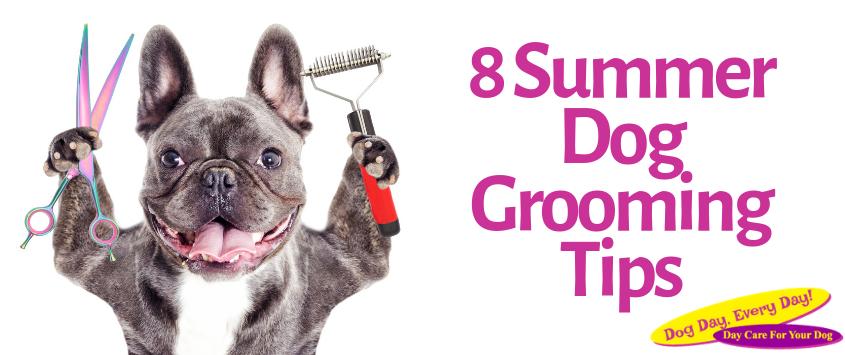 8 Summer Dog Grooming Tips