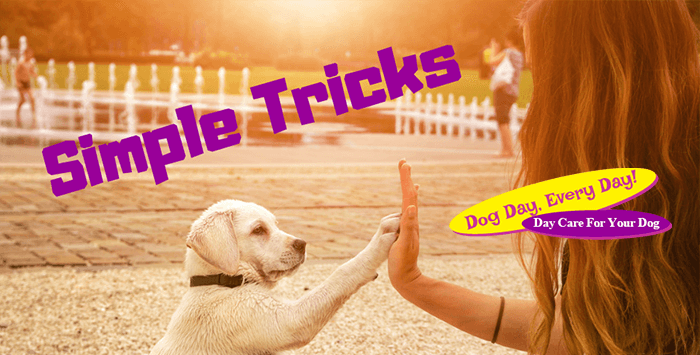 Simple Tricks To Teach Your New Puppy