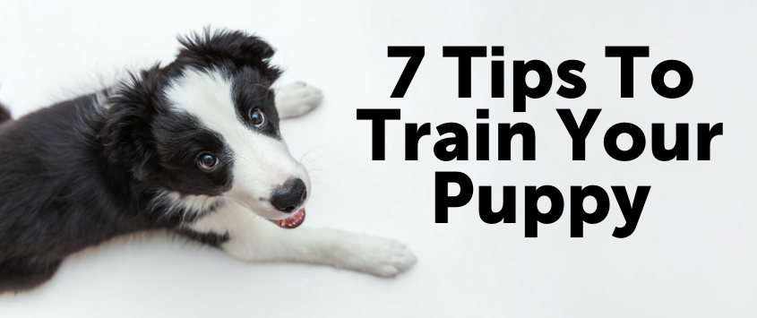 7 Tips To Train Your Puppy