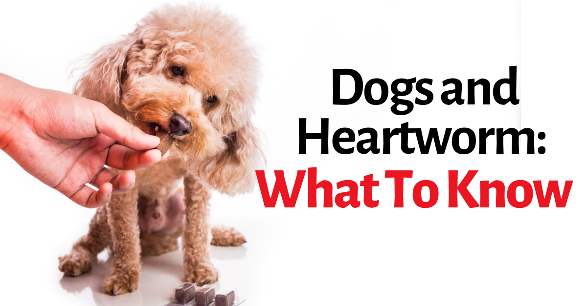 Dogs and Heartworm: What To Know