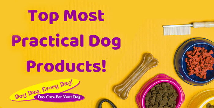 Top 10 Practical Dog Products