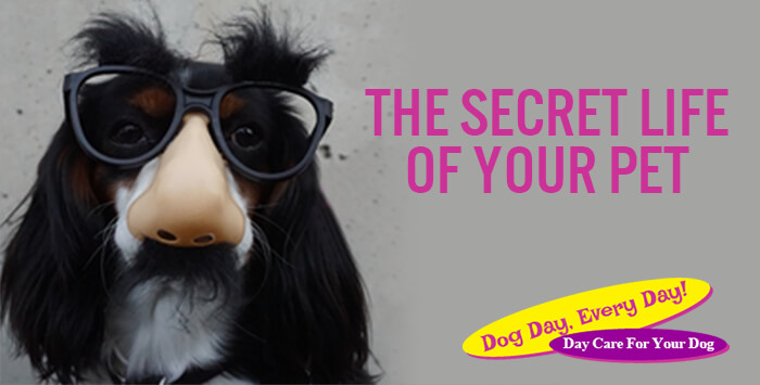 The Secret Life of Your Pet