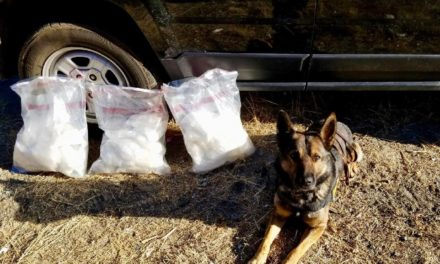 K9 Finds 30 Pounds of Narcotics in Vehicle